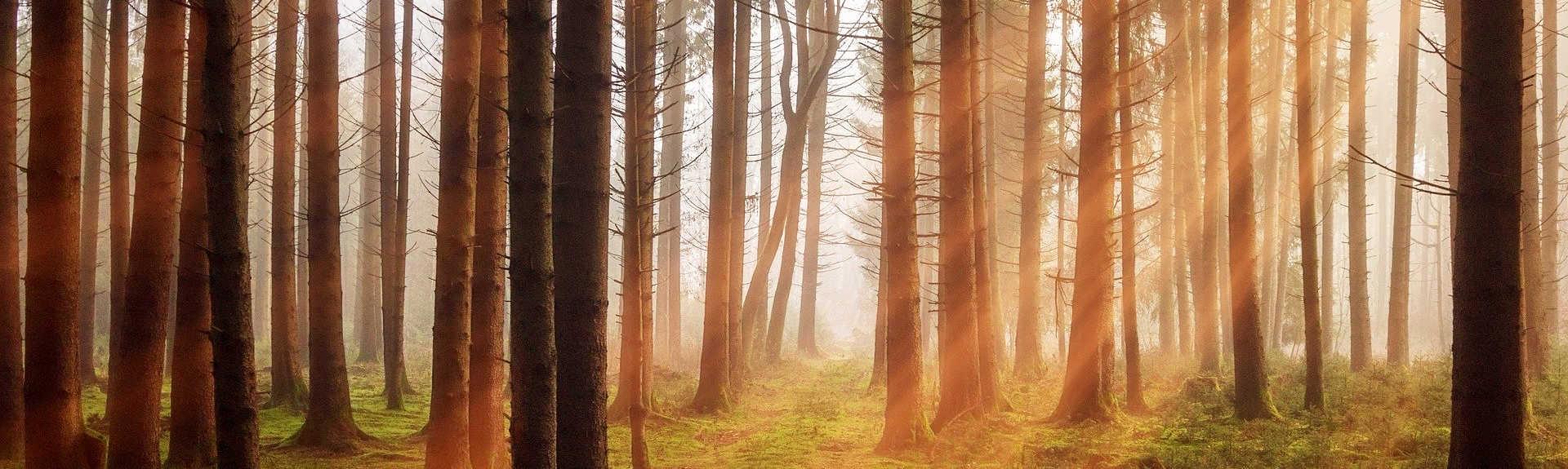 header - Forêt d'arbres sans feuilles au soleil couchant